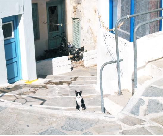 ギリシャの猫2- ほぼ日刊イトイ新聞
