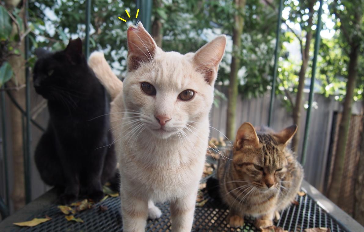 庭にくる野良猫とつきあうために...